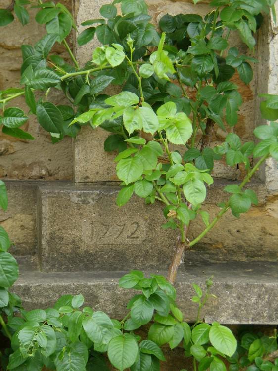 Croix des Rameaux place Lassalle